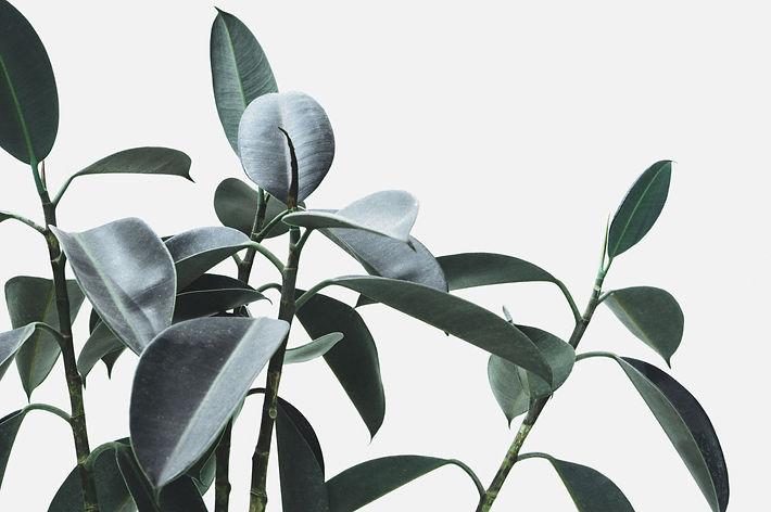 Plant_edited_edited.jpg
