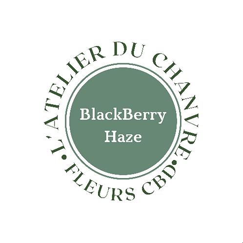 Black Berry Haze