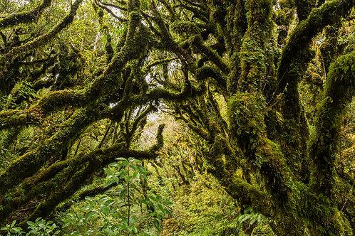 Goblin Forrest II
