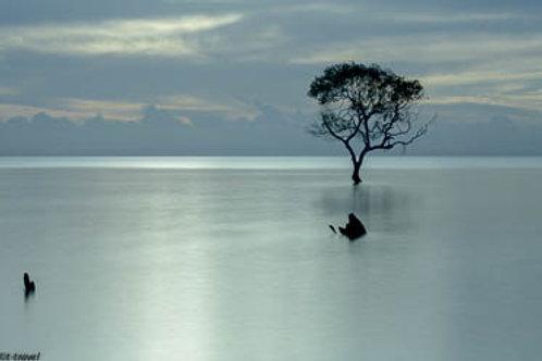 Mangrove Moods XV