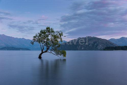Lone Tree VIII - Lake Wanaka