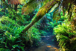Forest / Rainforest