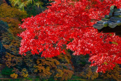 Autumn Kyoto