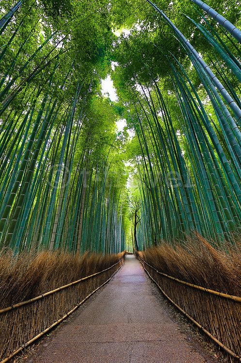 Bamboo Passage