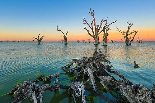 Lake Bonney - Sunset I