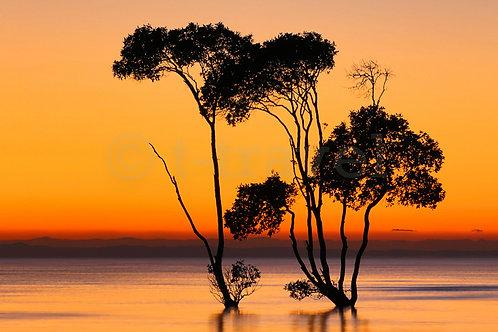 Mangrove Moods XXV