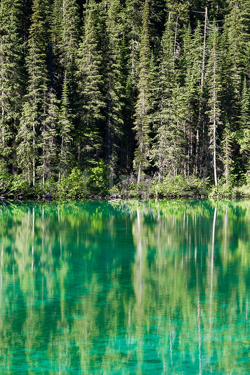 Olive Lake III