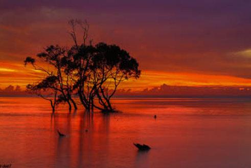 Mangrove Moods VII