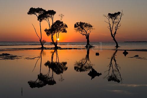 Morning Reflection I