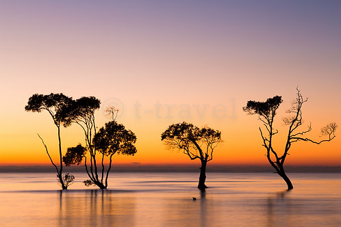 Mangrove Moods I