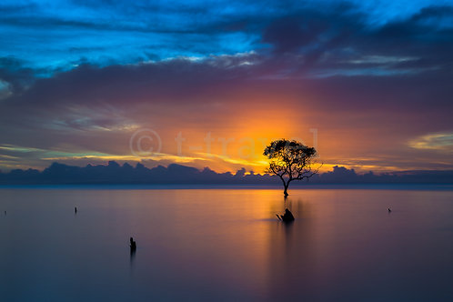 Mangrove Moods XIII