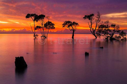 Mangrove Moods VI