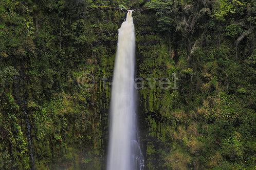 Akaka Falls IV