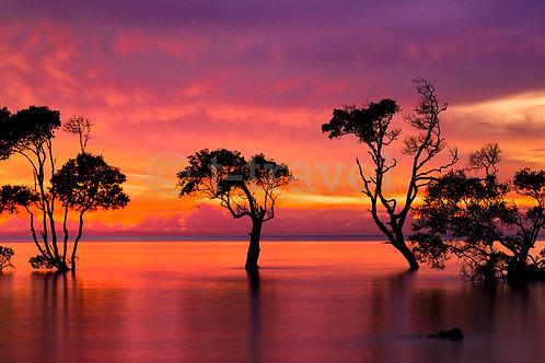 Mangroves on Fire