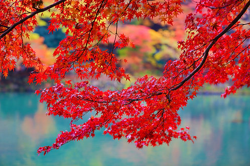 Colours of Hozugawa I