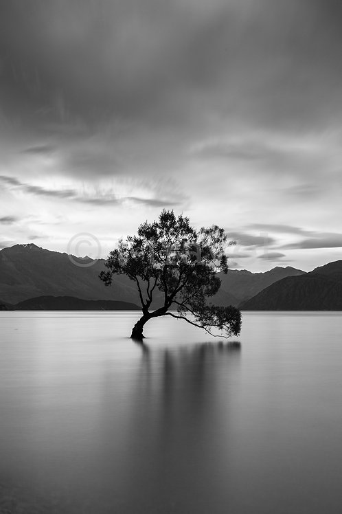 Lone Tree XI - Lake Wanaka