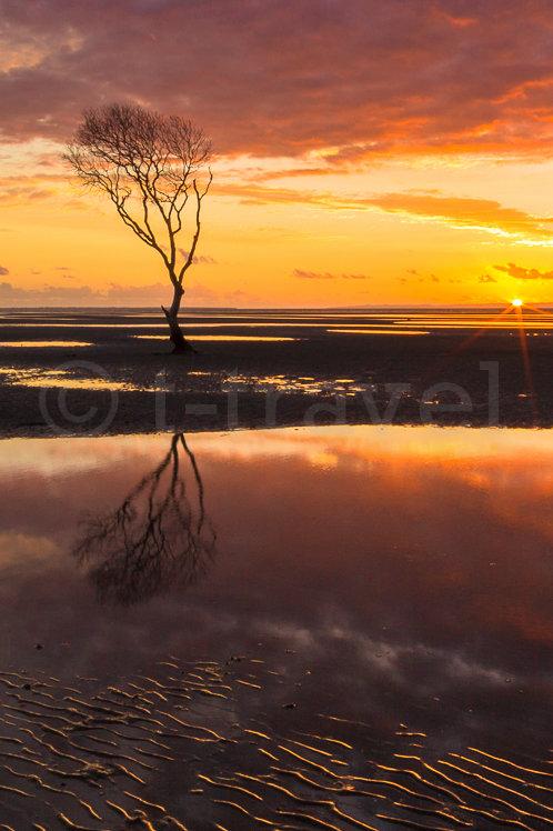 Mangrove Moods XXII