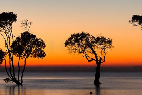 Mangrove Moods XXVI