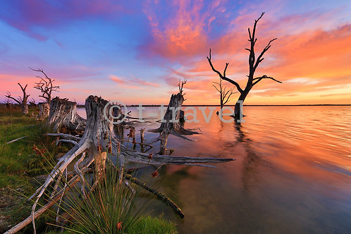 Lake Bonney - Sunrise XV