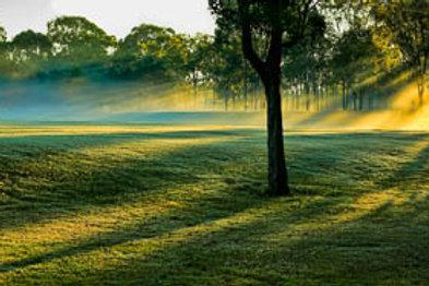 Sun rays in the morning mist