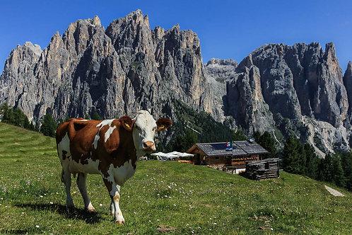 Dolomites - Italy