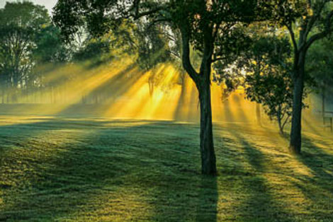 Sun rays in the morning mist