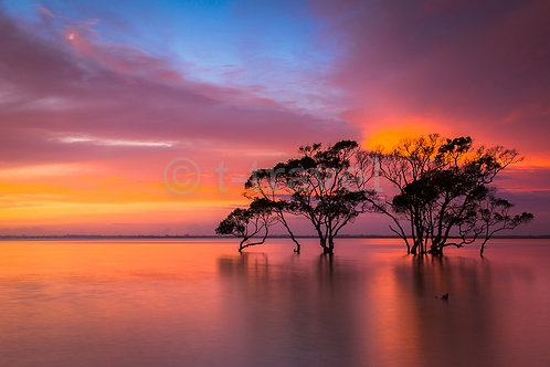 Mangrove Moods II