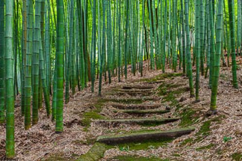 Path through the Bamboo Forrest