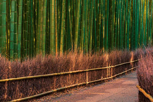 Sunset in Bamboo Forrest