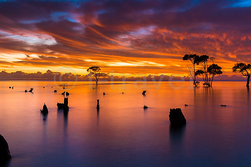 Mangrove Moods III