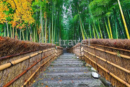Bamboo Grove I