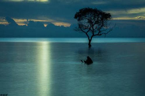 Mangrove Moods XIV