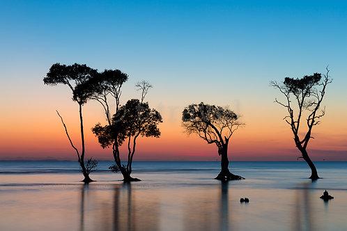 Mangrove Moods XVII