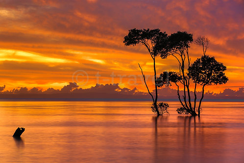Mangrove Moods V
