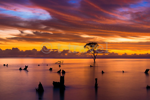 Mangrove Moods VIII