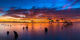 Mangrove Moods