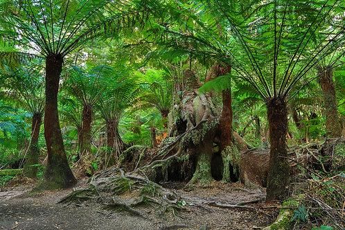 Maits Rest Rainforest V