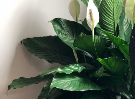 Purify Air (And Mood) with Houseplants
