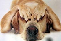 Frightened_dog.jpg