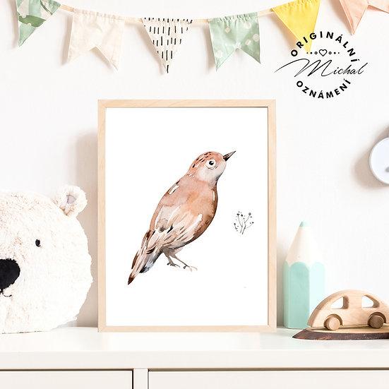 Plakát Ptáček Pepíček