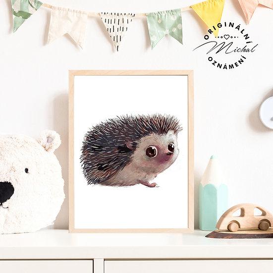 Plakát ježek očko