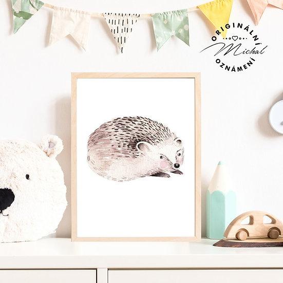 Plakát lesní ježek ježeček