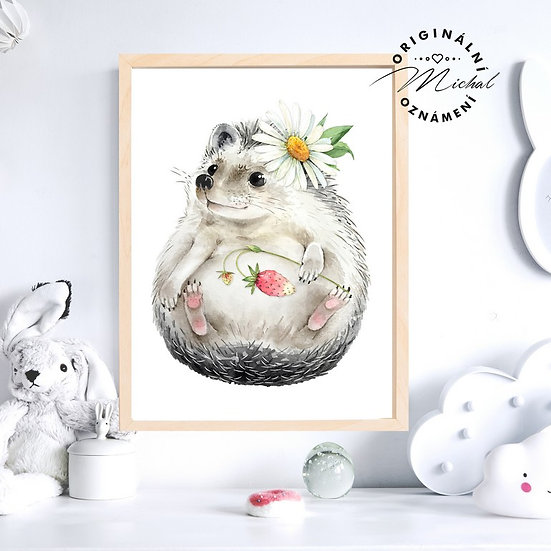 Plakát ježek kopretinka