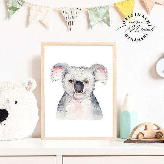 Plakát koala frajer