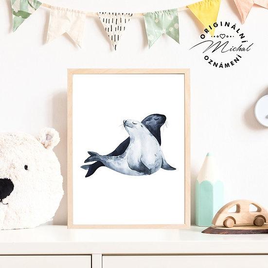Plakát tuleň lachtan