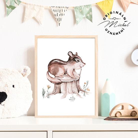 Plakát lesní veverka Anička