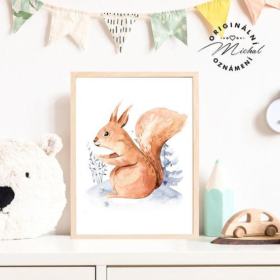 Plakát maminka veverka lesní obrázky