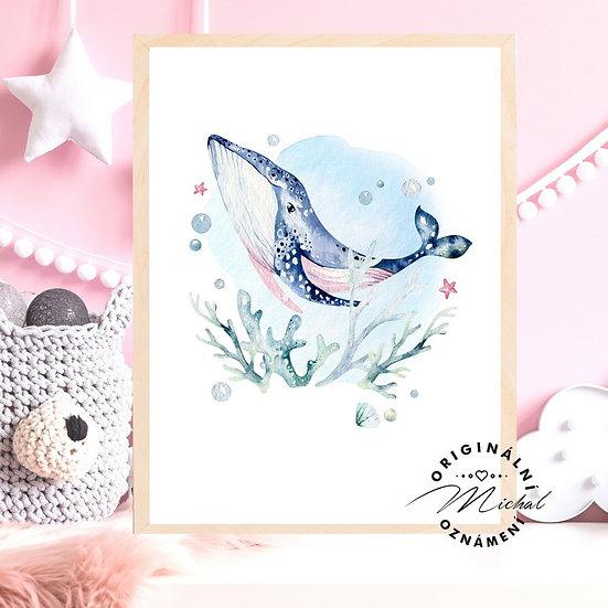 Plakát velryba plejtvák