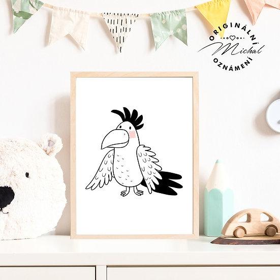 Plakát papoušek