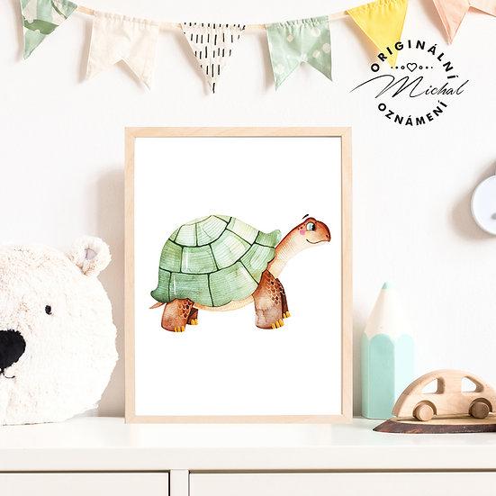 Plakát želva želvička